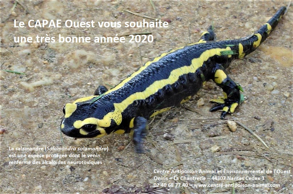 Centre Antipoison animal Capae Ouest